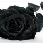 Búcsúzunk Csiszár Imréné Beától.